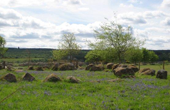 Moyness Stone Circle